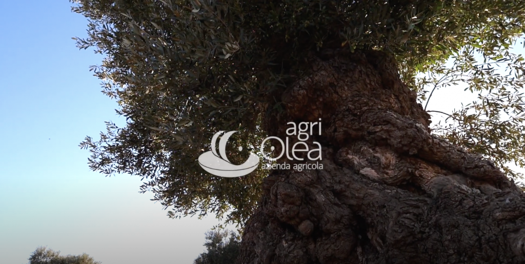 Agriolea